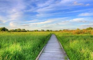 Nature Boardwalk 2